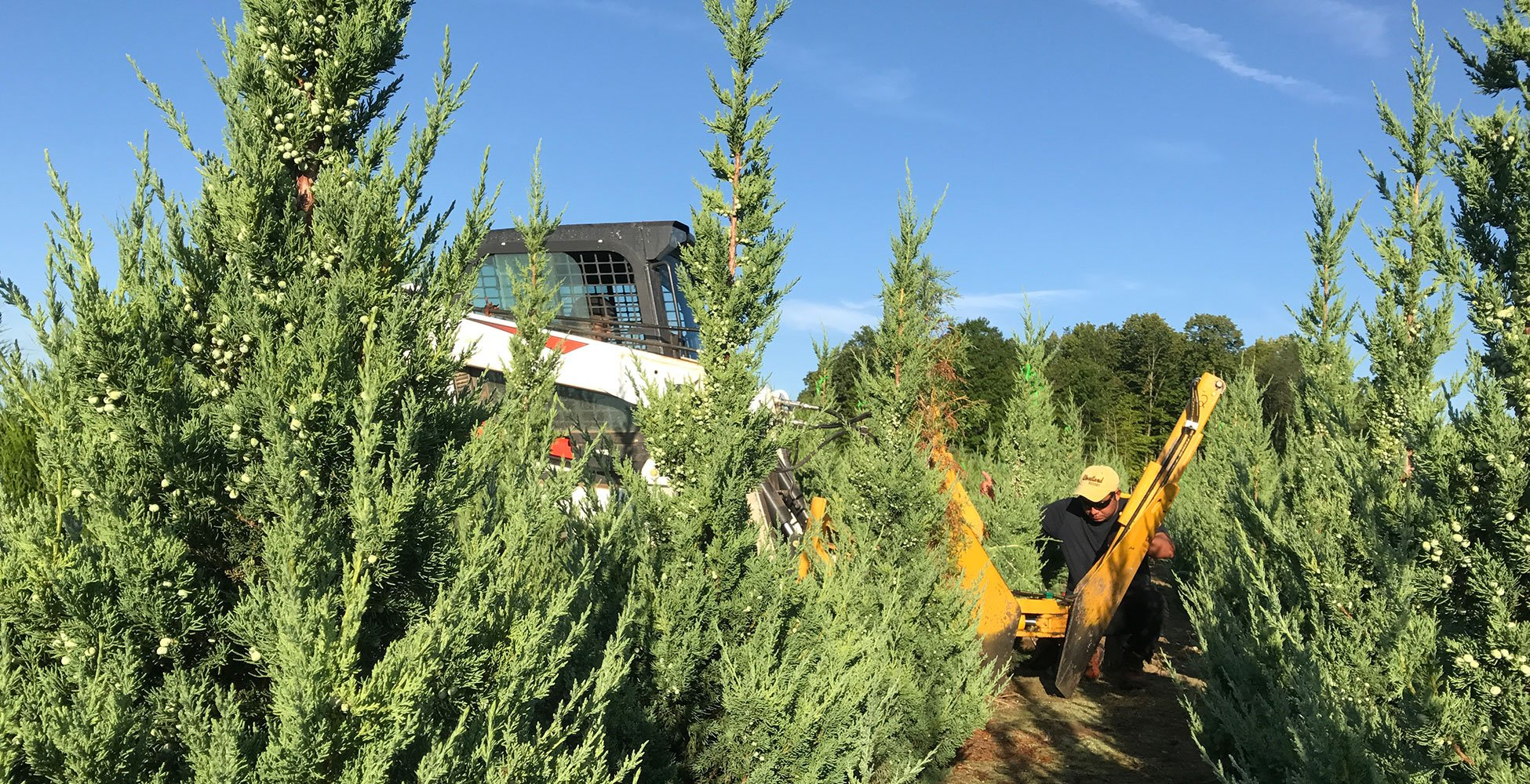 about johnson's nursery plant grower tree farm harvest evergreen juniper