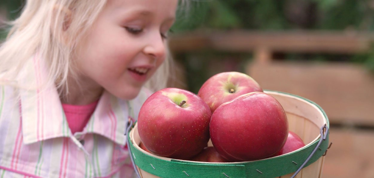 apple trees in wisconsin available at johnson's nursery in menomonee falls fruit plants now available