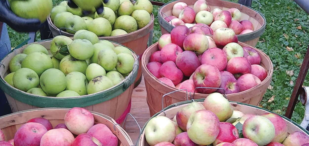 apple trees in wisconsin available at johnson's nursery in menomonee falls fruit plants pesticides