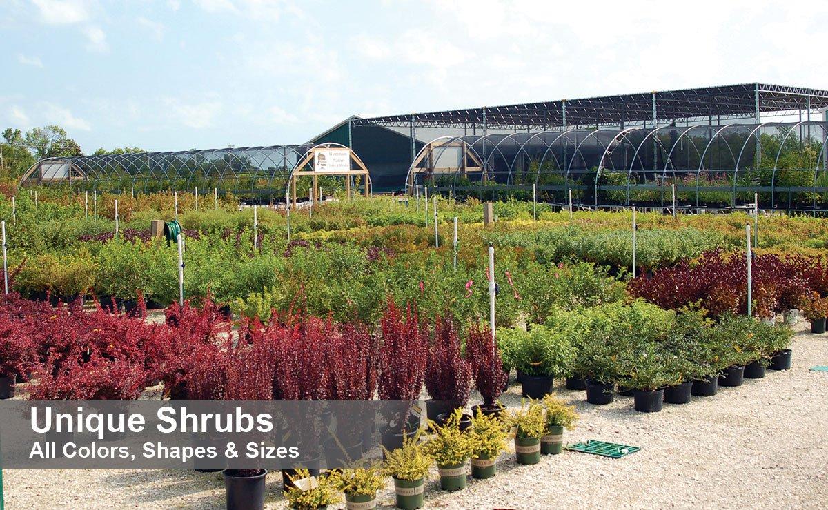 find unique shrubs for sale at johnson's nursery in menomonee falls wisconsin