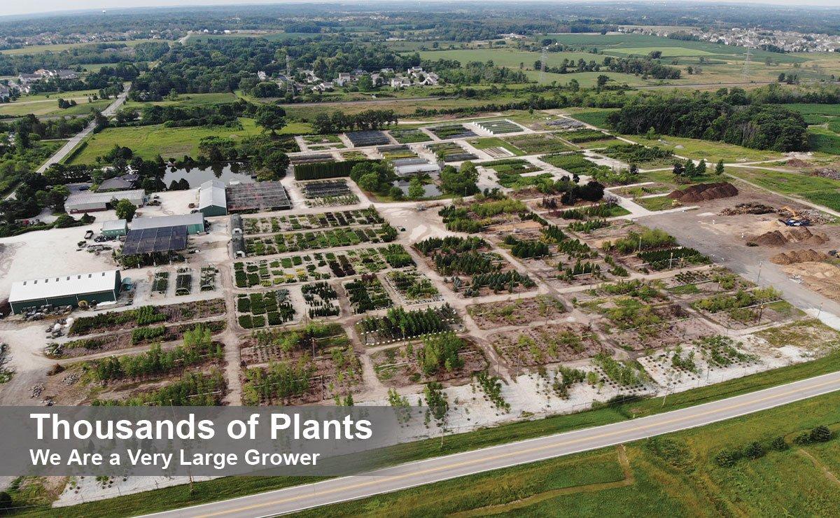 johnson's nursery find landscape plants near me for sale overview