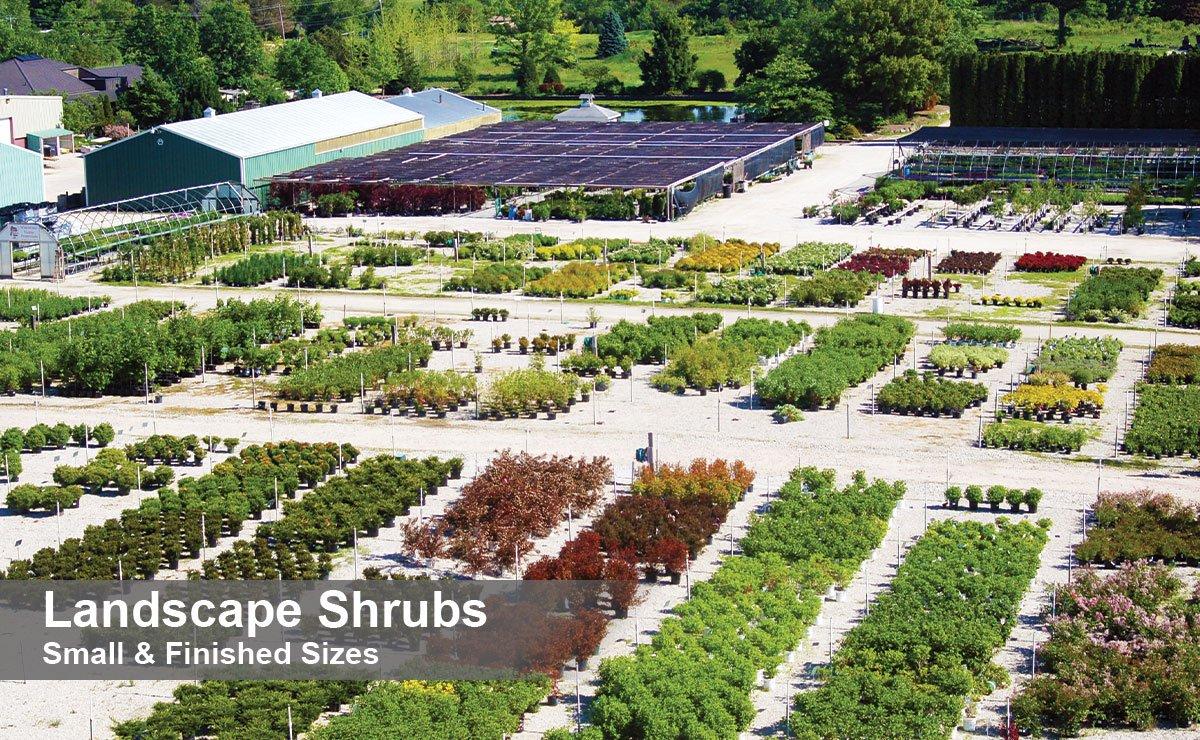 johnson's nursery plants landscape shrubs for sale