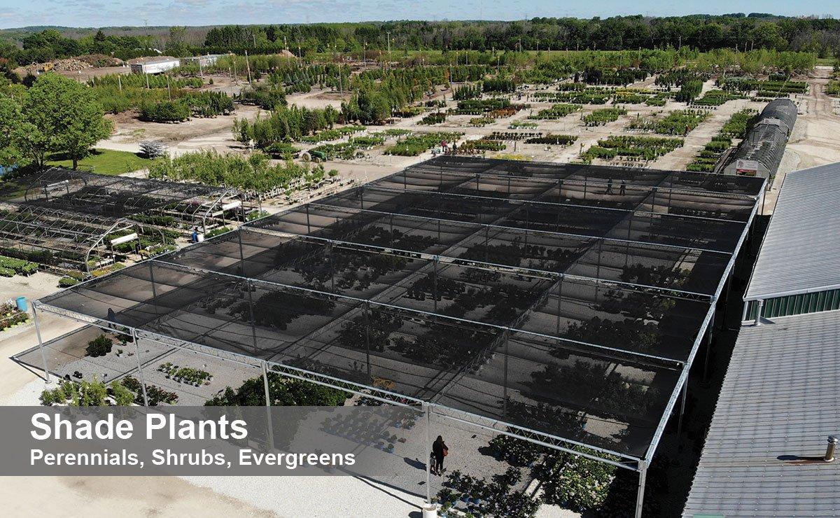 johnson's nursery plants shade plants shrub bushes perennial flowers evergreens