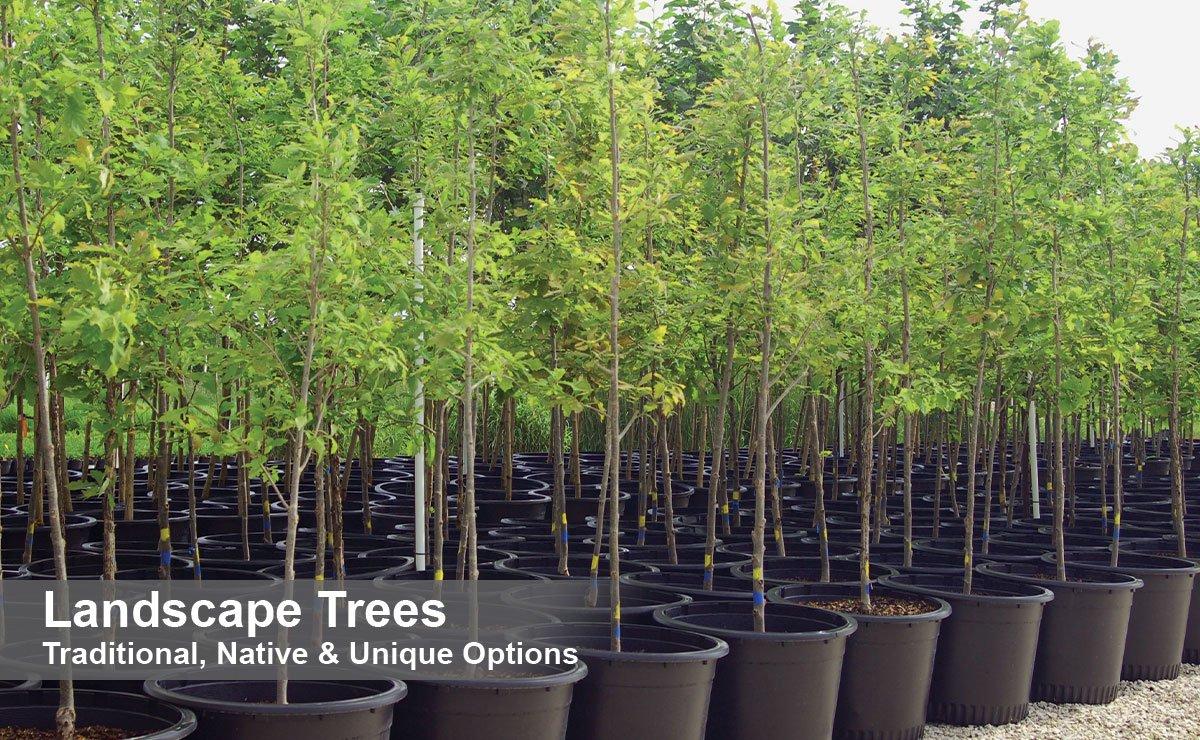 shop landscape trees for your yard at johnson's nursery in menomonee falls